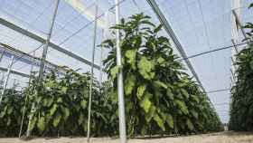 Invernaderos solares, la agricultura más sostenible de cara al futuro