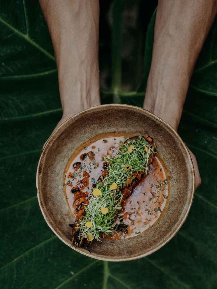 Camarones de Campeche - Wild Tulum
