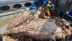 Un pescador, sorprendido por todo el atún muerto.