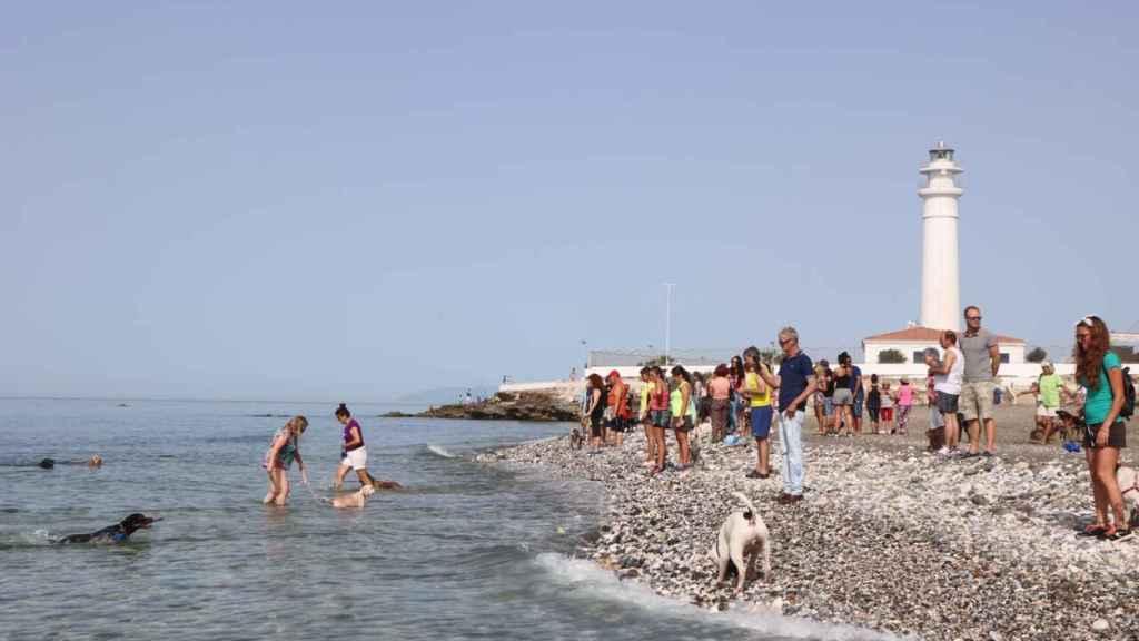 La cala de perros de Torrox es la elección idónea para pasar un día de playa más relajado que el programador de Neox.