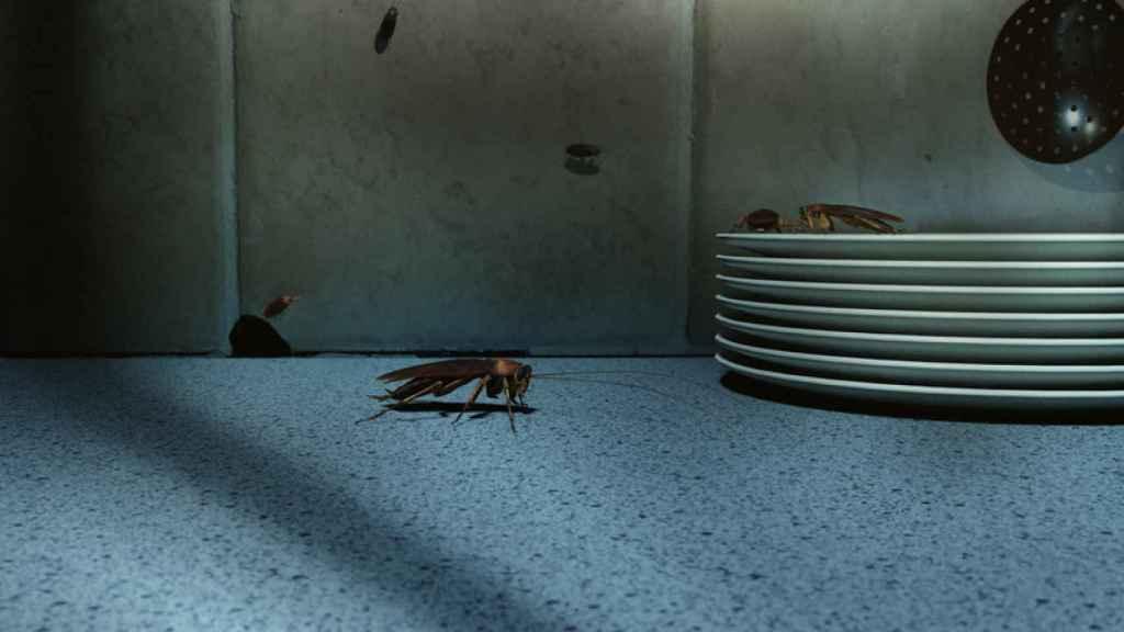 Consejos para evitar una plaga de cucarachas en nuestro hogar durante el verano