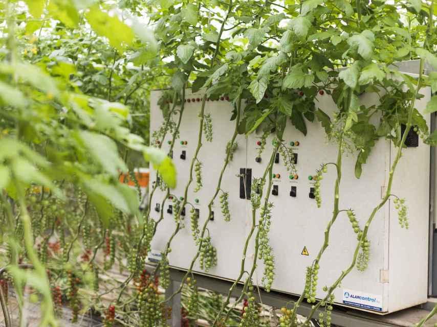 Sistema integrado de control de clima y riego para la optimización del uso de agua y fertilizantes