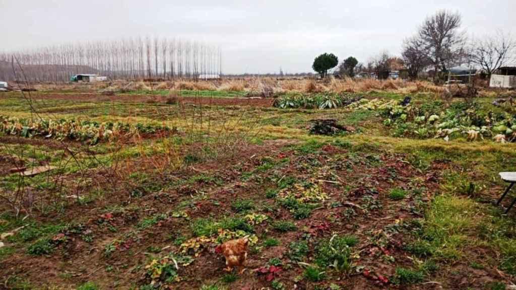 Malestar en Fontanar por la nueva ordenanza de los huertos municipales