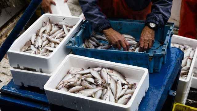 Pescador que ordena el pescado a bordo.