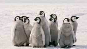 Pingüinos de la Antártida.