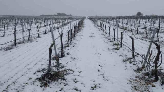 Buenas noticias para los viticultores de Castilla-La Mancha que han sufrido daños este año