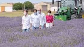 Pablo Casado durante su visita este domingo a los campos de lavanda de Brihuega