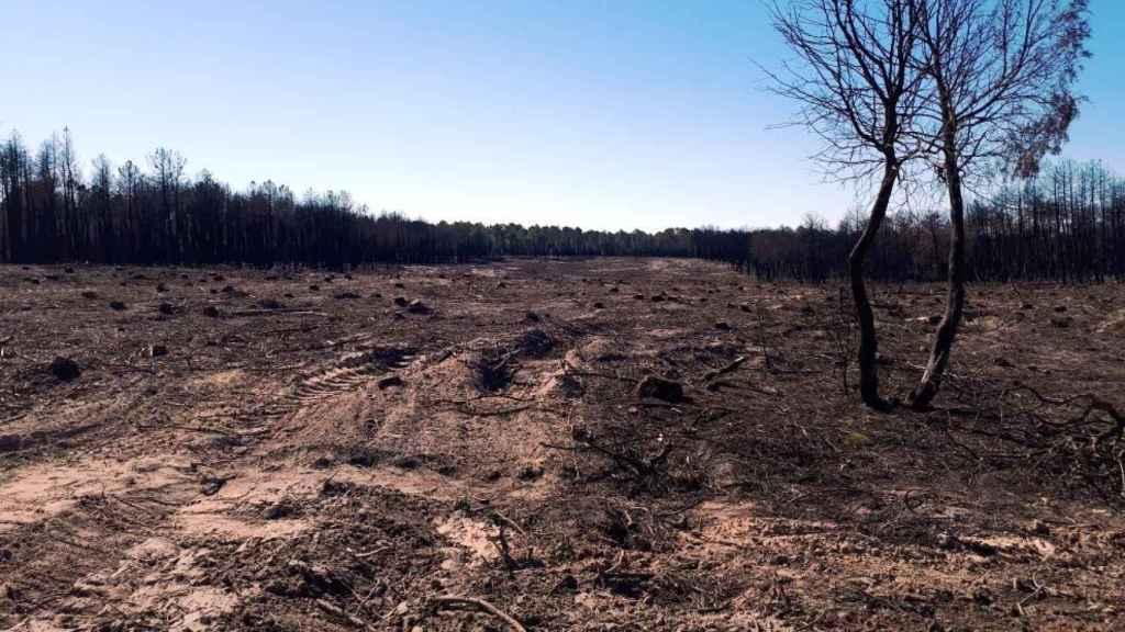 Zona afectada por el incendio de Barchín