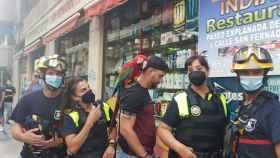 Rescate de película de un loro guacamayo que se había escapado en Alicante