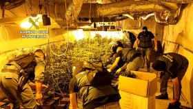 Así eran las macroplantaciones de marihuana escondidas en dos pueblos de Zamora 4