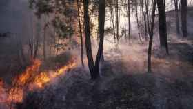 Incendio en un pinar Galicia.
