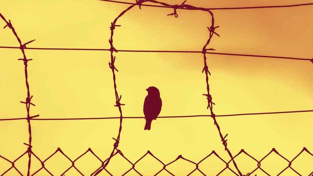 Un pájaro sobre las rejas de una prisión.
