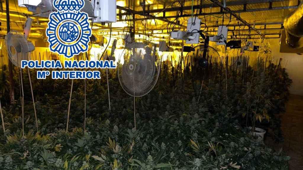 La nave industrial albergaba una plantación de marihuana.