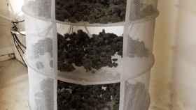 Cogollos de marihuana internvenidos en la operación Selva Negra.