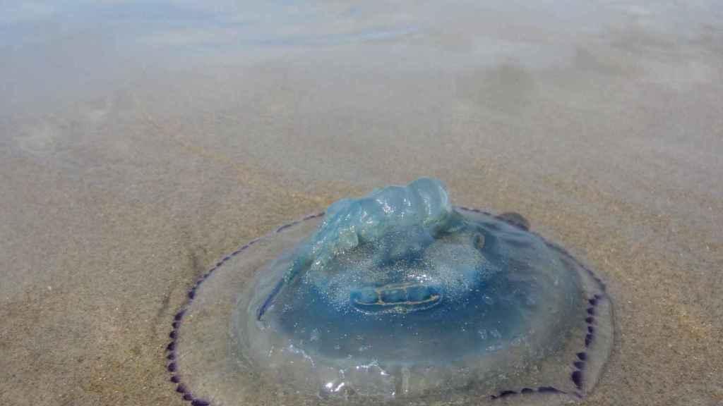 El roce con una medusa o la picadura de un insecto pueden arruinar una salida al aire libre.