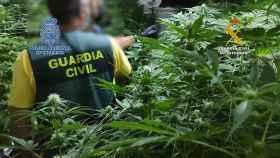 Desarticulado un grupo criminal dedicado al tráfico de estupefacientes entre Países Bajos y España