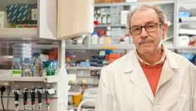 El investigador del CSIC Vicente Larraga, en su laboratorio del CIB-CSIC. / CSIC Comunicación