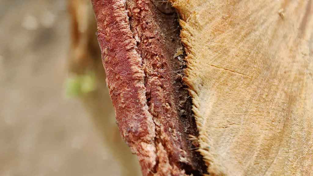 Macro photography of a tree trunk