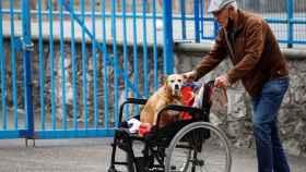 Un hombre pasea a su perro este miércoles junto a una residencia de ancianos de San Sebastián.