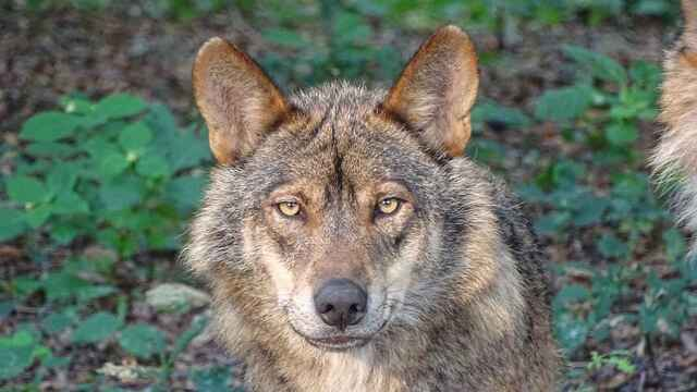 Estas son las especies de animales protegidas en España