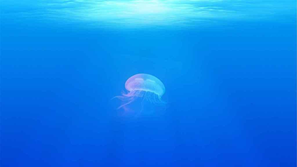 Estas son las curiosidades que desconocías sobre las medusas