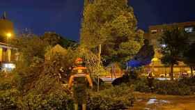 Balance de daños tras la gran tormenta en Alcázar de San Juan: árboles caídos, balsas de agua...