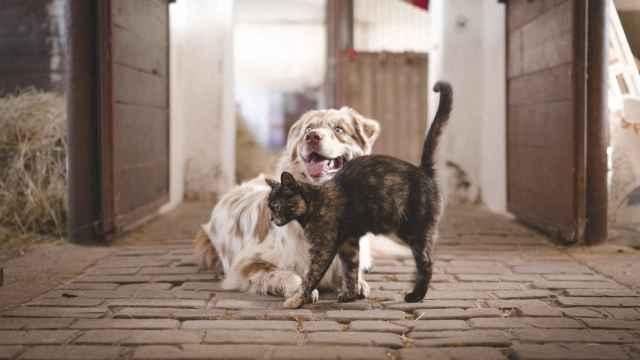 ¿Cómo hacer que un gato acepte a un perro?