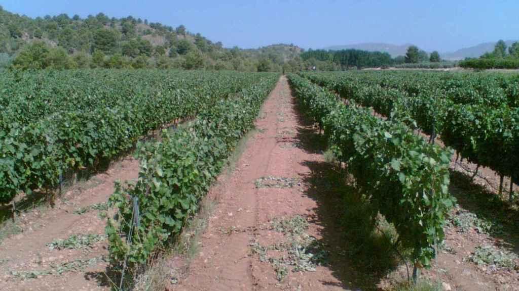 Rechazo frontal en Castilla-La Mancha a la propuesta del ministro Planas sobre la PAC