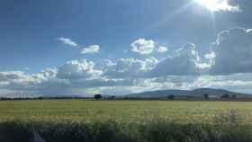 Archivo - Campo. Agricultura.