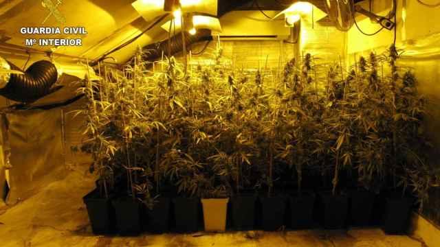 La droga encontrada por la Guardia Civil en la buhardilla de una vivienda de Seseña.