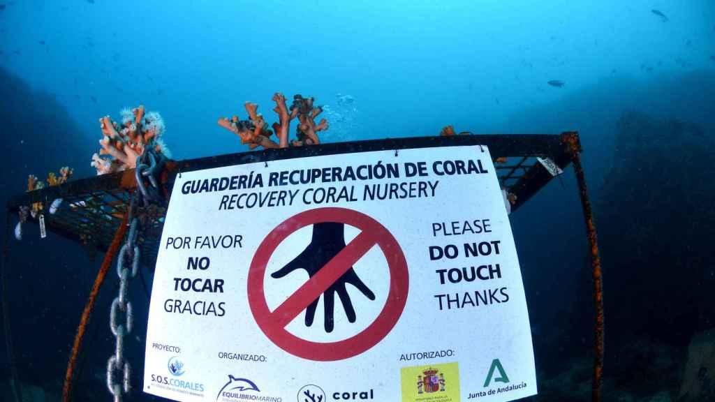 Guarderías de recuperación de corales en Málaga.