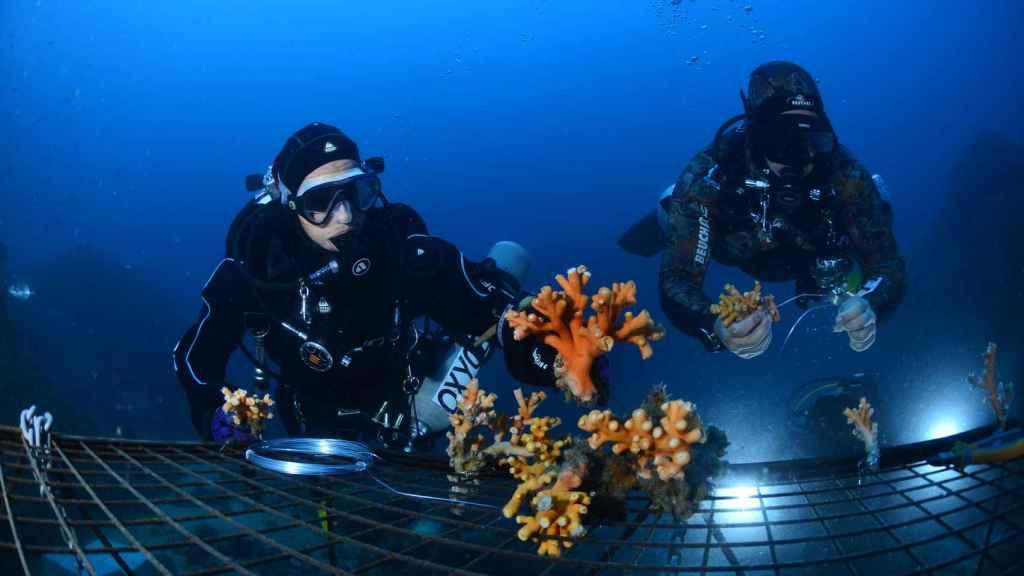 Si los corales son los ecosistemas que más mitigan el calentamiento global, ¿por qué no los recuperamos?