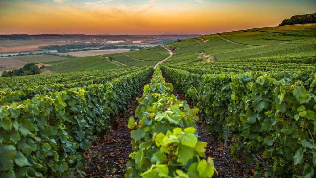 El viñedo de Champagne sufre ya los efectos del cambio climático.