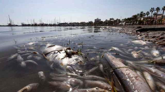 Aspecto del Mar Menor en los Urritias, Cartagena.