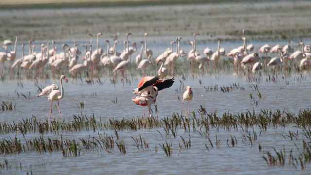 Una imagen de archivo muestra a flamencos en el Parque Nacional de Doñana.