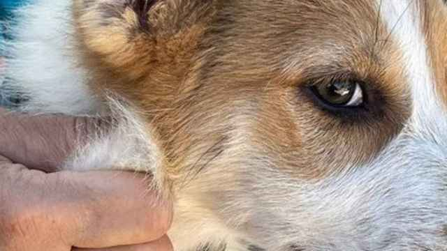 Maltrato animal. Foto: Guardia Civil