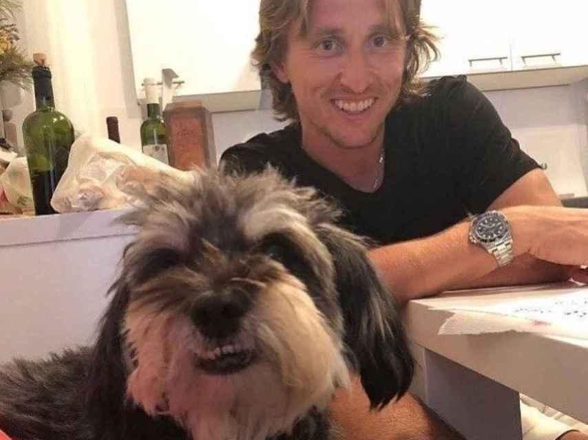 El bichón maltés de Luka Modric
