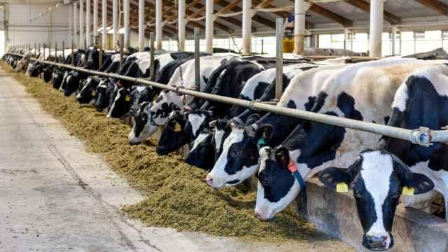 Sector ganadero. Imagen de archivo.