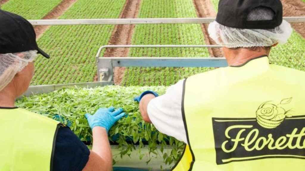 Junta y Diputación de Cuenca rechazan el cierre definitivo de Florette