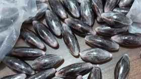 Intervenidos 10.000 gramos de hachís en Chinchilla