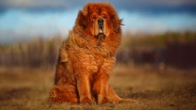 Estas son las razas de perros más raras del mundo