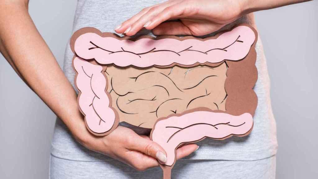 En el intestino ocurre la digestión y absorción de los alimentos.