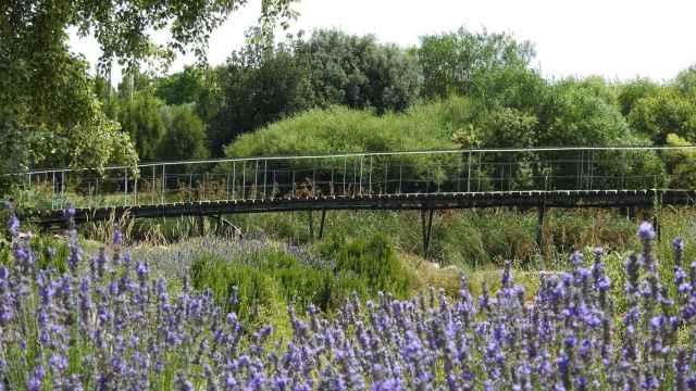 El Jardín Botánico de Castilla-La Mancha.