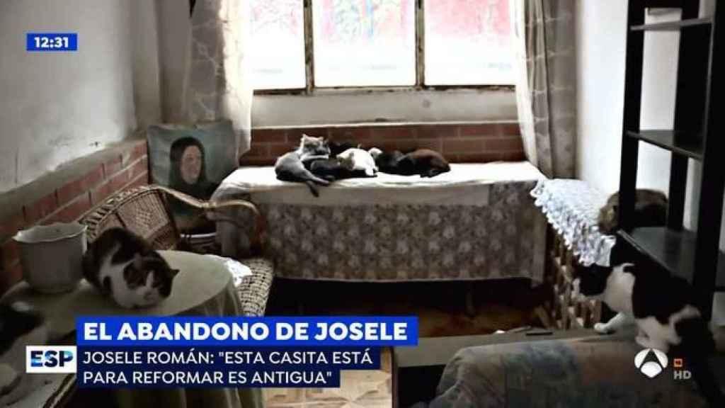 Imagen de la casa de Josele y los gatos que le hacen compañía.