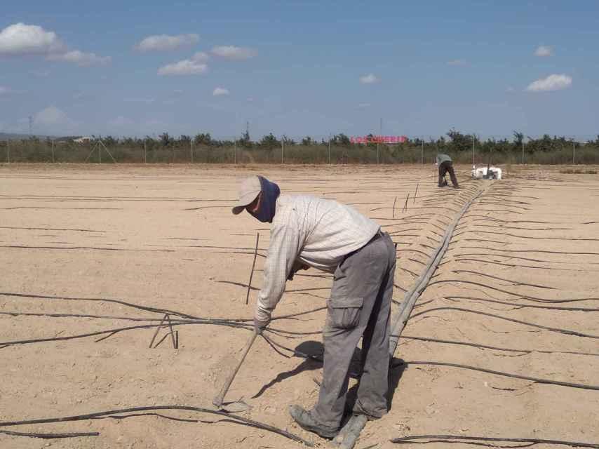 Los amigos de Abdellah, este lunes, en la finca agrícola donde trabajan en El Jimenado.