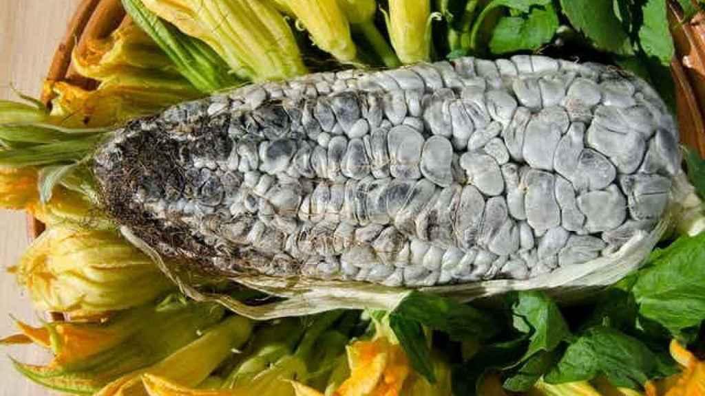 Maíz infectado con huitlacoche.