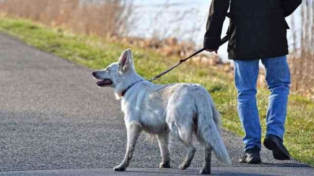 El truco para conseguir que tu perro no te tire de la correa