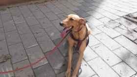 Final feliz para este atleta canino en Parquesol