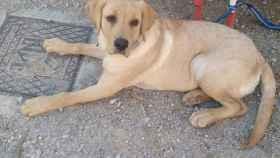 Alerta en Mota del Cuervo (Cuenca) por el envenenamiento de varios perros en los últimos días