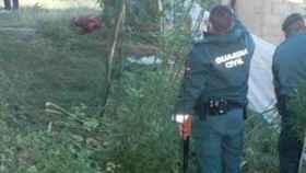 Plantación de marihuana ilegal en Layna (Soria). - SUBDELEGACIÓN DEL GOBIERNO